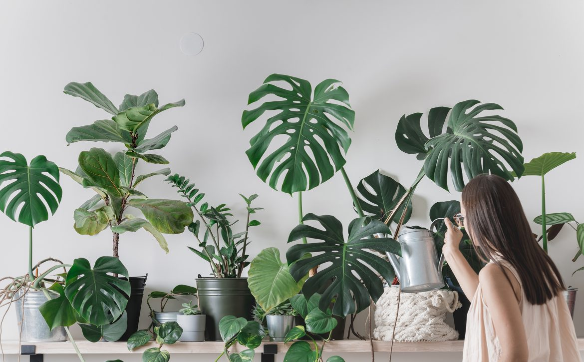 Woman,Is,Taking,Care,Of,Houseplants.,Urban,Jungle,Interior.,Watering