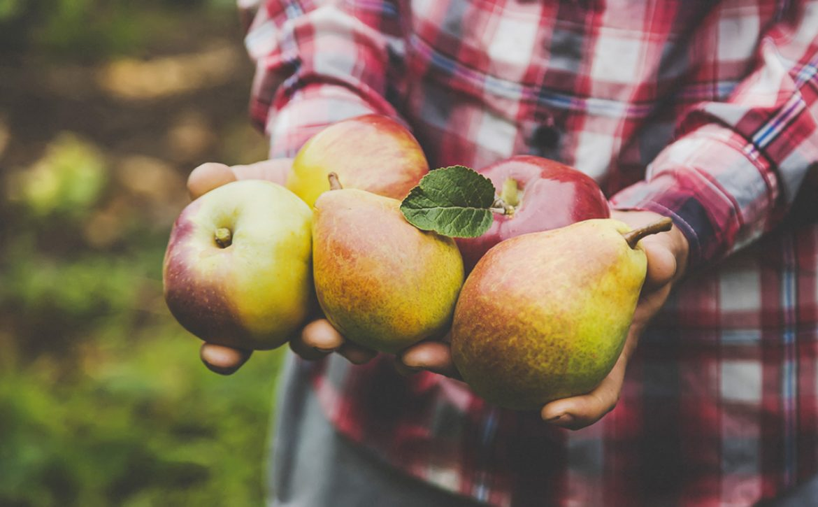 A,Man,Holds,A,Harvest,Of,Apples,In,His,Hands.